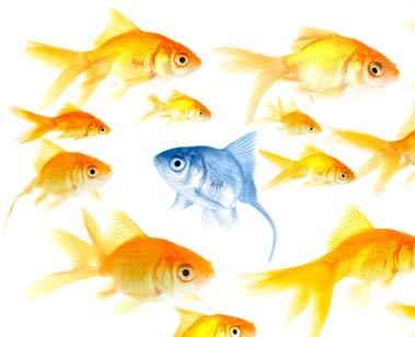 ikan.jpg